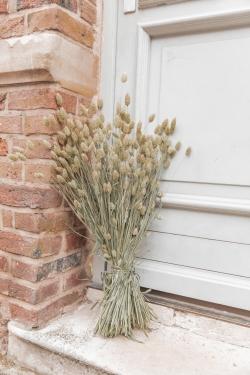 Bouquet de fleurs séchées Phalaris Naturelle 70cm