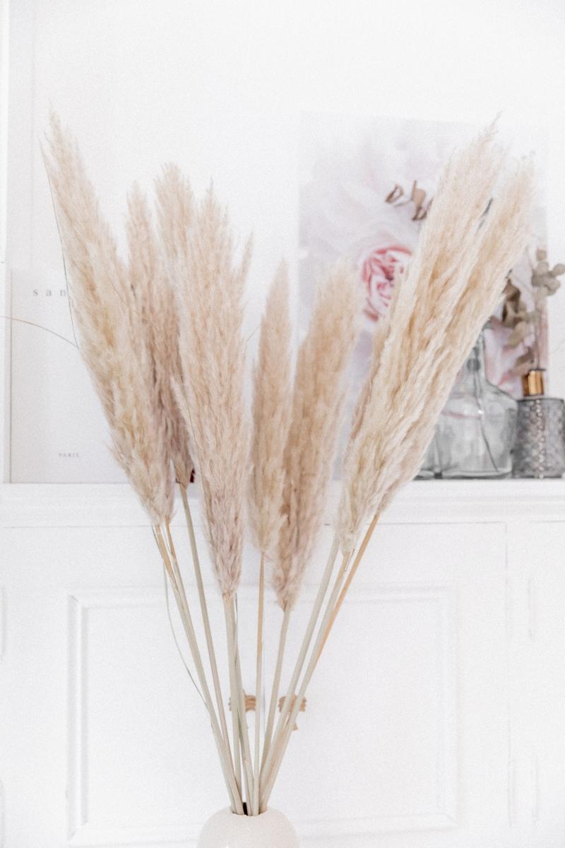 Bouquet de 3 tiges Pampa XL 110cm