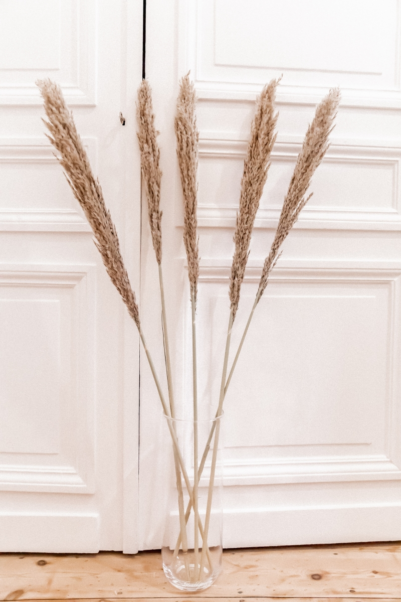 Bouquet de 5 tiges Arundo 110cm