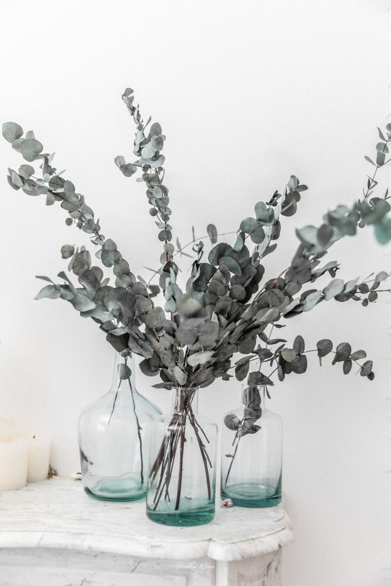 Bouquet de fleurs séchées eucalyptus Cinerea 65 cm