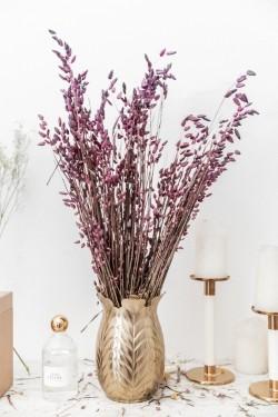 Bouquet de fleurs séchées Briza Maxima Violet 100 gr