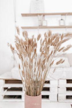 Bouquet de fleurs séchées Lagurus Naturel 70cm